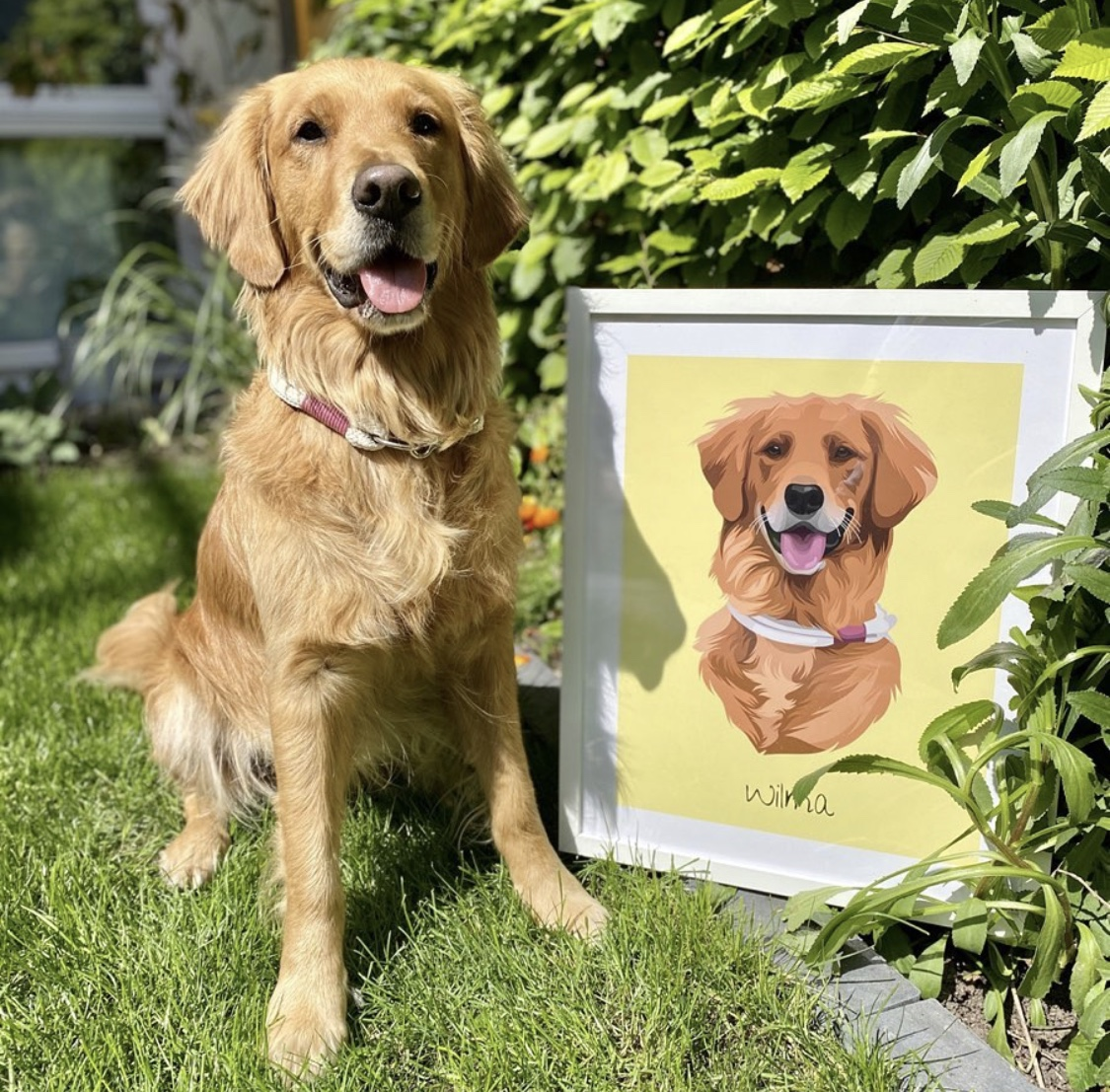 Golden Retriever als Wandbild